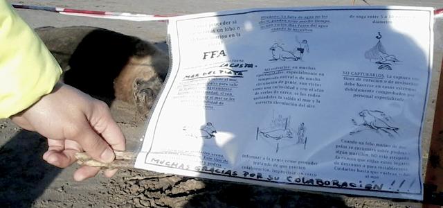 Photo of Aprendiendo a convivir con la fauna marina