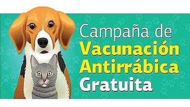 Photo of La campaña de vacunación antirrábica llega a la zona Sur del distrito