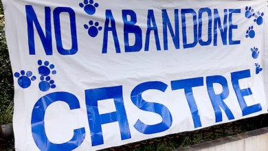 Photo of De interés canino y felino