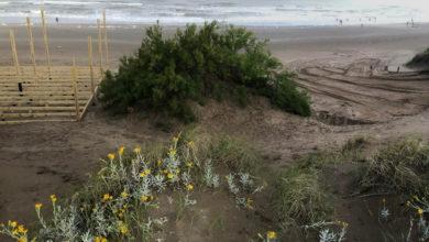 Photo of Clase abierta sobre médanos costeros (y por qué no construir sobre ellos)