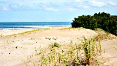 Photo of La fragmentación de hábitats de las dunas costeras (Parte I)