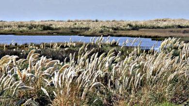 Photo of La fragmentación de los hábitats de las dunas costeras (Parte III)