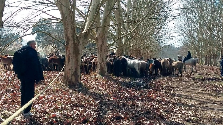 Rescate caballos Ezeiza