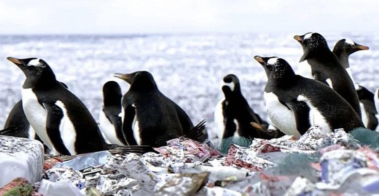 Pingüinos plástico