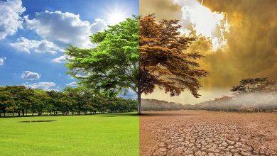 Photo of ¿Qué podemos hacer por el planeta según 11.000 científicos alrededor del mundo?