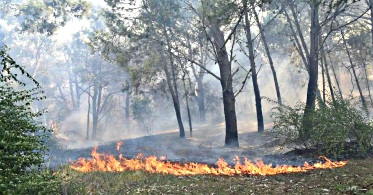 Incendio Villa Gesell
