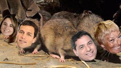 Ratas La Costa