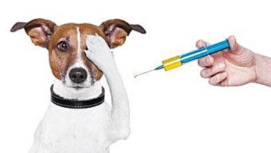 Vacunación perro