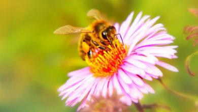 Día de las abejas