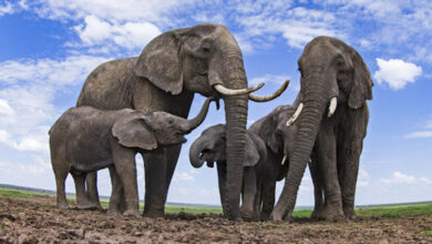 Elefante habitación
