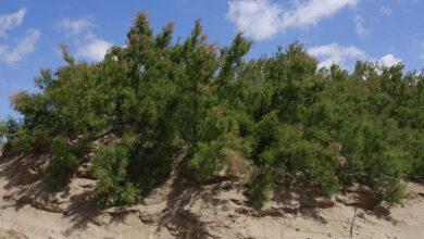 Forestar La Costa